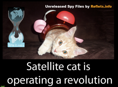 satelite_spycat