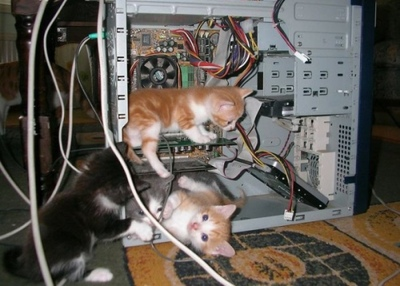 Cute-Kittens-In-Computer-Case